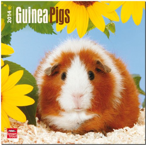 Guinea Pigs 2014 Calendar, 18-Month Calendar (Multilingual Edition) by Brand: Browntrout Pubs (Cal)