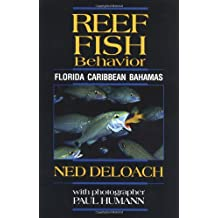 Reef Fish Behavior: Florida Caribbean Bahamas