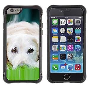 Suave TPU GEL Carcasa Funda Silicona Blando Estuche Caso de protección (para) Apple Iphone 6 PLUS 5.5 / CECELL Phone case / / Labrador Dog Pet Canine White /