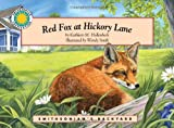 Red Fox at Hickory Lane - a Smithsonian's Backyard Book (Mini book)