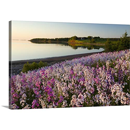 (GREATBIGCANVAS Gallery-Wrapped Canvas Entitled Phlox Flowers, Prince Edward Island, Canada by John Sylvester 18