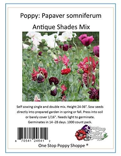 1000-Papaver somniferum Poppy Seeds-Antique Colors-One Stop Poppy Shoppe® Brand.