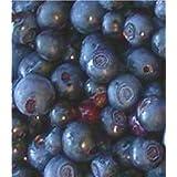 10 Allegheny Huckleberry Seeds -Wild edibles