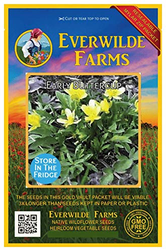 Everwilde Farms - 40 Early Buttercup Native Wildflower Seeds - Gold Vault Jumbo Seed Packet
