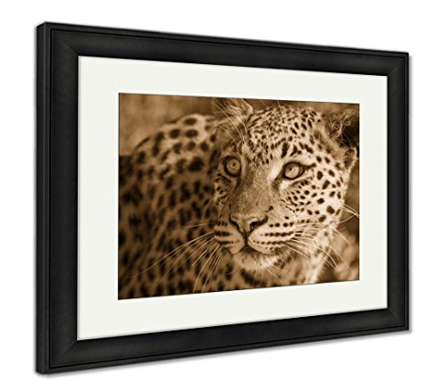 Ashley Framed Prints Sight of The Namibian Wilderness, Wall Art Home Decoration, Sepia, 34x40 (Frame Size), Black Frame, AG6182635 - Sight Framed