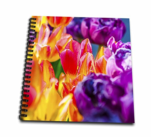 3dRose Alexis Photography - Flowers Tulips Enchanting - Tulips Enchanting - Blushing floral beauty on a flowerbed - Memory Book 12 x 12 inch ()