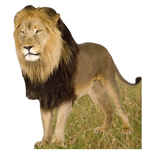 - Jungle Safari Lion Standee Standup Photo Booth Prop Background Backdrop Party Decoration Decor Scene Setter Cardboard Cutout