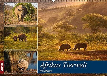 Afrikas Tierwelt: Nashörner (Tischkalender 2019 DIN A5 quer): Expedition zu den letzten ihrer Art! (Monatskalender, 14 Seiten ) (CALVENDO Tiere) 3670248080 Namibia Safari Südafrika