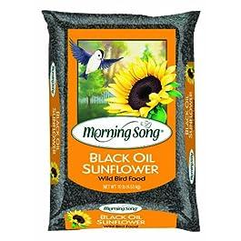 Morning Song 11997 Black Oil Sunflower Wild Bird Food, 5-Pound