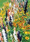 David's Garden Seeds Wildflower Butterfly Hummingbird Mix DGS30062A (Multi Color) 500 Open Pollinated Seeds