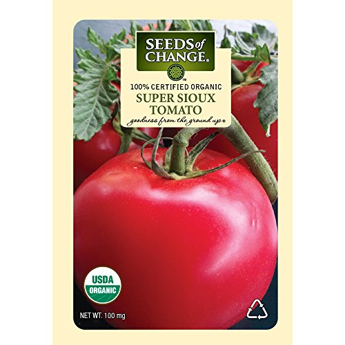 super tomato seeds - 2