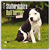 Staffordshire Bull Terrier Puppies 2016 Square 12x12 by Browntrout Publishers (2015-07-15)
