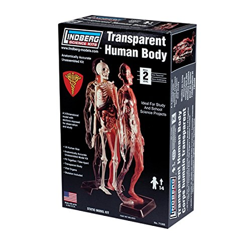 Lindberg Transparent Visible Human Body 1/6 Scale Plastic Model Kit