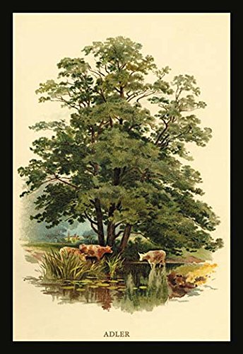 Buy buyenlarge 'alder tree' by w.h.j. boot graphic art
