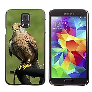 Etui Housse Coque de Protection Cover Rigide pour // M00133652 Ave Rapaz Birds Predator // Samsung Galaxy S5 S V SV i9600 (Not Fits S5 ACTIVE)