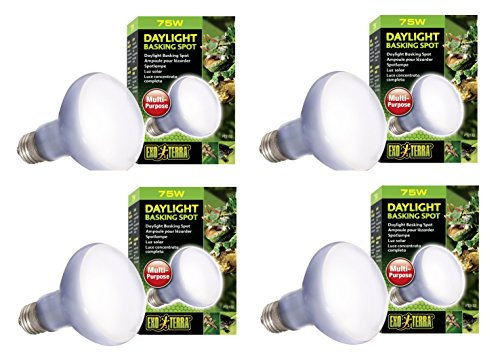 (Exo Terra Daylight Basking Spot Lamp 75w)