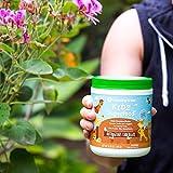 Amazing Grass Kidz Superfood: Organic