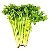 Cheap Vastravel Chinese Celery Light Yellow NON-GMO Vegetable 1000 Seeds