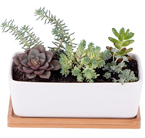 StarPack Premium Small White Ceramic Succulent Planter Pot with Bamboo Base (Indoor Planter Boxes Tall)