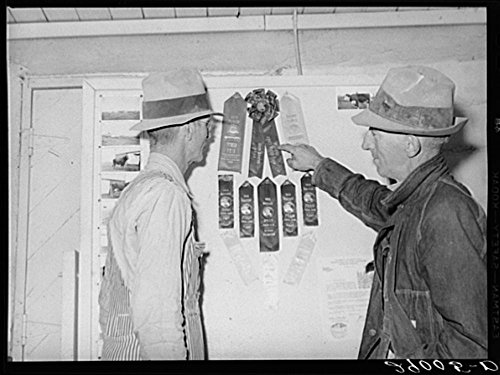 Thoroughbred livestock from the cooperatives have won many prizes at county and state fairs. Osage Farms, Missouri