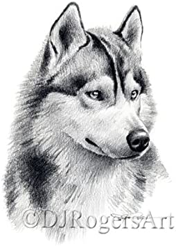 Original Watercolour Siberian Husky Dog Fine Art Giclee Archival Print Poster