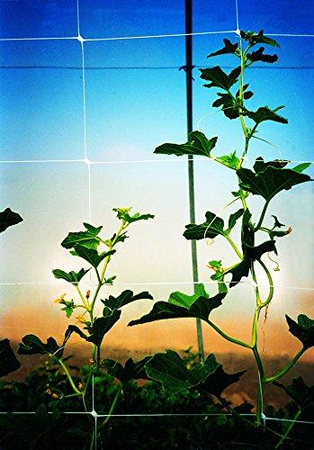 Tenax 100522968 084065 Hortonova Sm Plant Trellis Net, 4 X 100 White