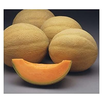 Sweet 'n Early Cantaloupe Hybrid Organic short season 25+ seeds NON-GMO