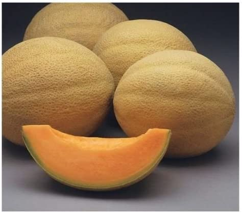 Sweet N Early Cantaloupe Hybrid Organic Short Season 25 Seeds Non Gmo Amazon Ca Patio Lawn Garden In the markets, try to buy organically produced cantaloupe outer surface may harbor harmful salmonella bacteria, especially at areas of minor. amazon ca