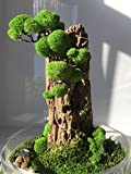Artificial Organic Plant Decoration For Office And Home | Bonsai Tree | Artificial Tree | Eco Gift | Glass Dome Terrarium by Victor Tur