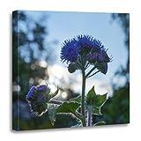 """TORASS Canvas Wall Art Print Purple Sunset Ageratum Floss Flower Blue Pretty Artwork for Home Decor 20"""" x 20"""""""