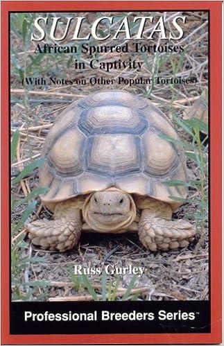 Sulcatas: African Spurred Tortoises in Captivity (Professional