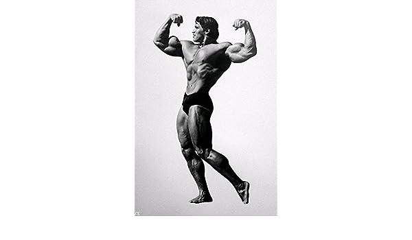 Amazon lawrence painting arnold schwarzenegger bodybuilding