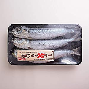 築地魚群 真いわしの丸干し 冷凍便