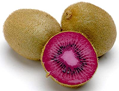 Kiwi Seeds - PINK LADY - Great Houseplant - RARE TROPICAL FRUIT - 50 Seeds
