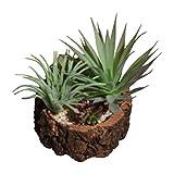 Modern Mini Potted Artificial Succulent Plants - Faux Plant Home Decor (Tree ...
