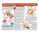The Dog's Body Systems - A Double-Sided, UV