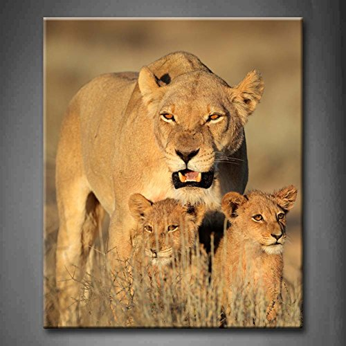 First Wall Art - Lioness With Cubs In Early Morning Light Kalahari Desert South Africa Grass Wall Art Painting Pictures Print On Canvas Animal The Picture For Home Modern Decoration - Africa South Pictures