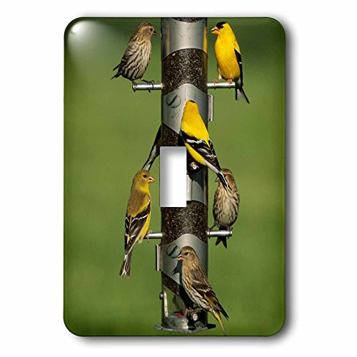 3dRose Danita Delimont - Bird - Pine Siskins and American Goldfinches on feeder, IL - Light Switch Covers - single toggle switch (lsp_250904_1) Pine Finch Feeder