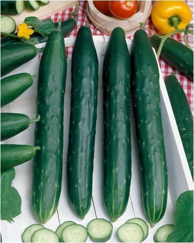 Burpless #26 Hybrid Cucumber Seeds - Cucumis Sativus - 0.5 Grams - Approx 18 Gardening Seeds - Vegetable Garden Seed ()