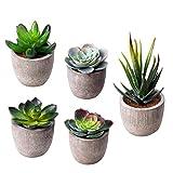 HBlife Fake Plants Artificial Succulent Plants Assorted Decorative Faux Succulent Potted Fake Cactus Cacti Plants Gray Pots, Set of 5