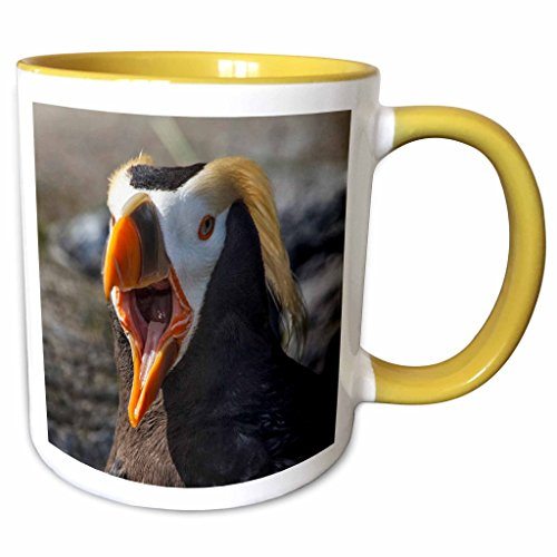 3dRose Danita Delimont - Birds - Tufted Puffin bird,
