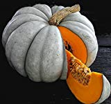 Blue Jarrahdale Pumpkin 15 Seeds - Decorative & Edible