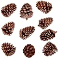 Buytra 10 Pack Christmas Pine Cones 2.75-4 Inches Natural Pinecones Ornaments for DIY Crafts, Xmas Table Centerpieces, Home Decorations