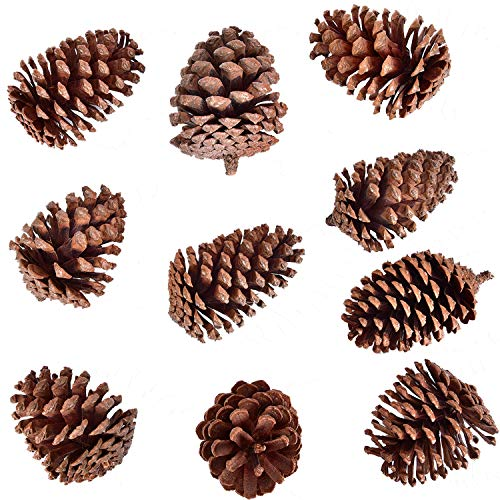 Buytra 10 Pack Christmas Pine Cones 2.75-4 Inches Natural Pinecones Ornaments for DIY Crafts, Xmas Table Centerpieces, Home Decorations]()