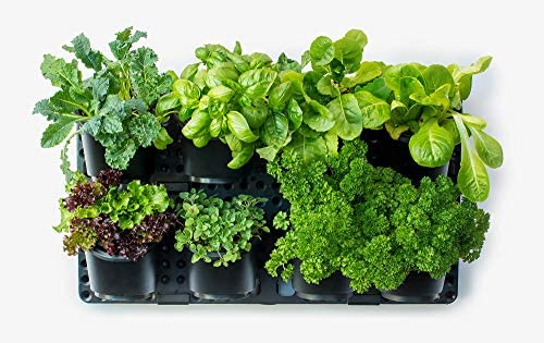 Expandable Green Wall w Built-in Micro dripper, Single Pack BPA Free Planters