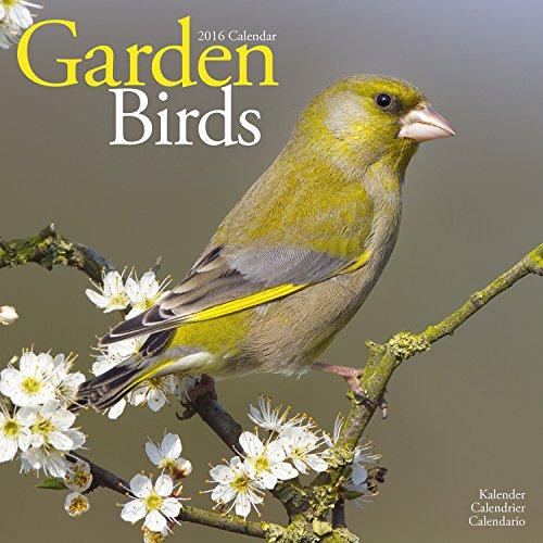 Garden Birds Calendar - 2016 Wall calendars - Animal Calendar - Monthly Wall Calendar by Avonside