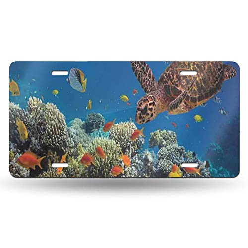 Colorful Fishes and Old Turtle Personalized Custom Name License Plate Tag Custom Name State Your Name Your State - Choose from All 50 States, 6