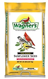 Four Season Oil Sunflower Seed