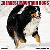 Just Bernese Mountain Dog 2018 Wall Calendar (Dog Breed Calendar)