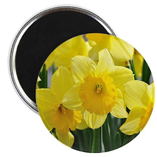 CafePress - Trumpet Daffodil - 2.25